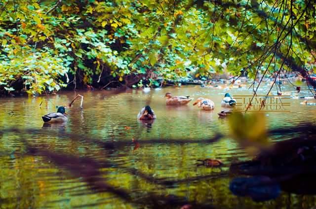 Staten Island Photographer Lemuel Ayudtud U2013 Snug Harbor Botanical Gardens  Staten Island