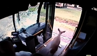 deer-bus-window-3