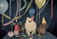 party-animals-1
