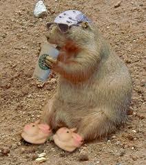 starbucks-groundhog1