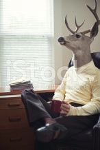 stock-photo-10432866-stag-man-in-his-office